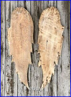 Salvaged Pair of 39 Large Wood Angel Wings Shabby Chic or Christmas Decor